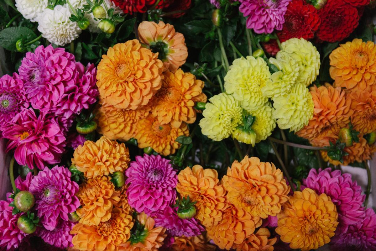 """Natječaj za zakup prodajnog mjesta """"Prigodna proljetna prodaja cvijeća i presadnica"""""""