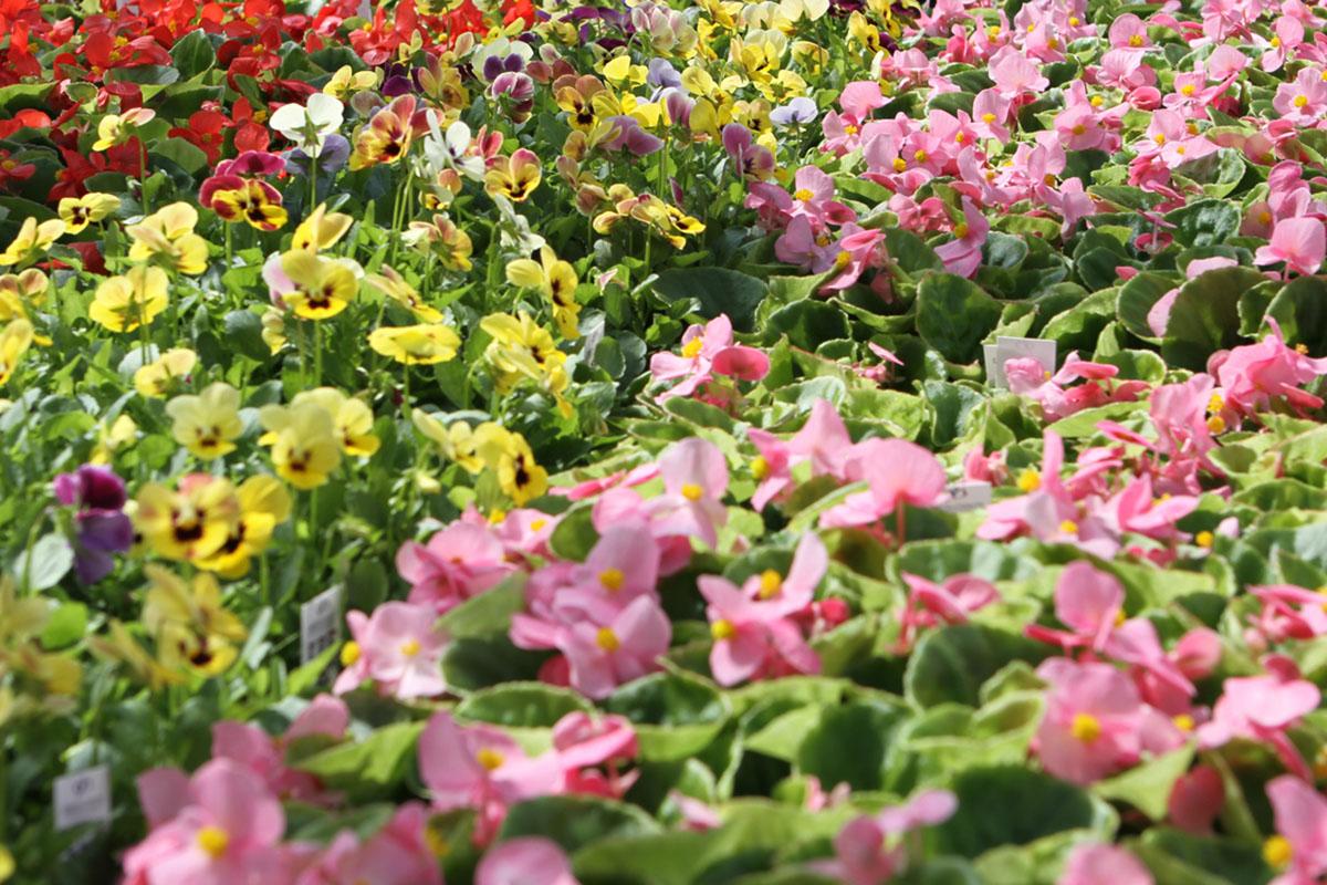 """Natječaj za zakup prodajnog mjesta """"Prigodna proljetna prodaja cvijeća i presadnica"""" – 2021."""